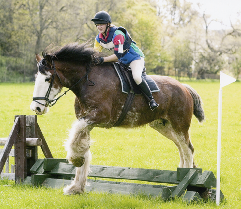 Arradoul Ponies, Thoroughbred and Clydesdale Horses For Sale